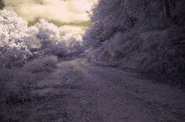 Sentiero del Bosco della Ficuzza (PA)