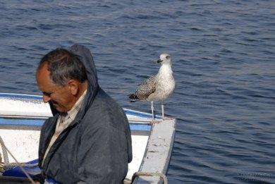 Il pescatore ed il gabbiano