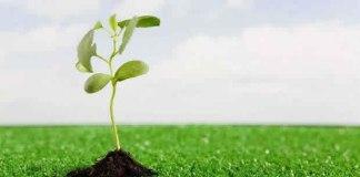 Deus nos ajuda a crescer