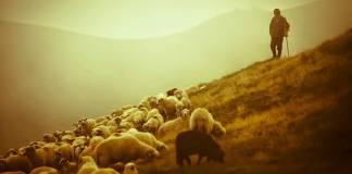 """O Pastor e as """"Ovelhas Negras"""""""