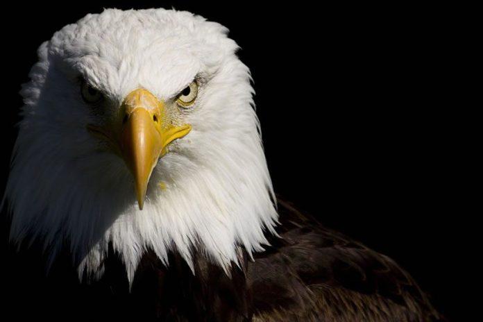 Seja um Vencedor: Aprenda a lição da Águia!