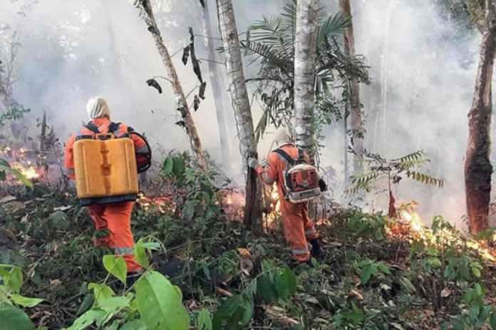 """""""Dia do Fogo"""": o momento-chave das queimadas na Amazônia"""