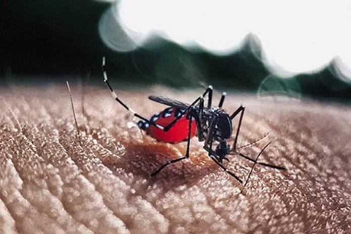 Estudo identifica circulação de nova linhagem da zika no Brasil