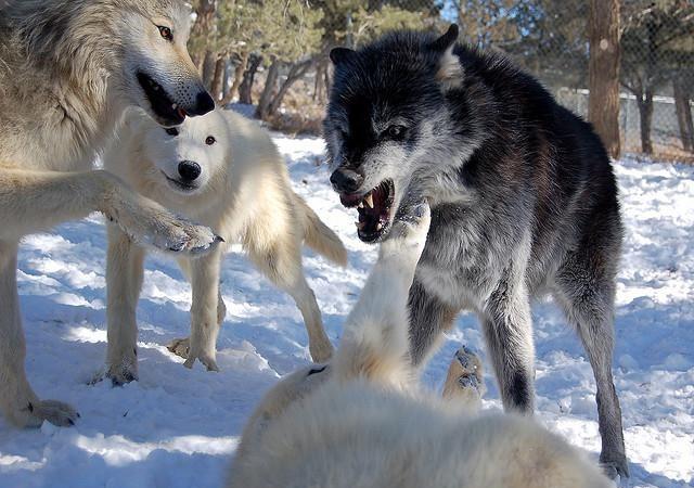 mad-dog-mishaved