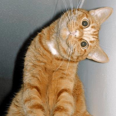 Curiosity Didn't Kill The Cat