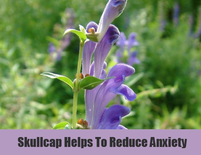 Skullcap Helps To Reduce Anxiety