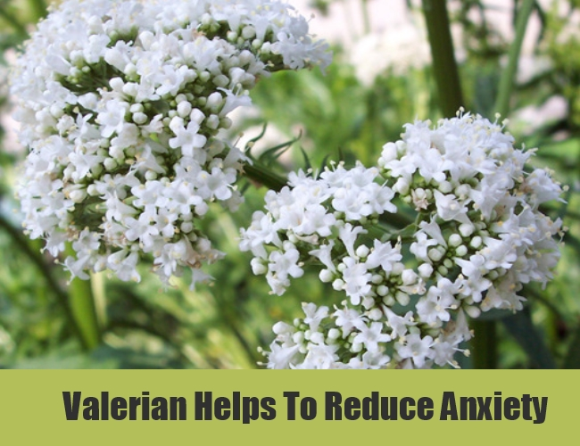 Valerian Helps To Reduce Anxiety
