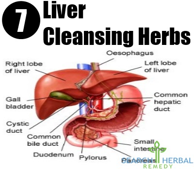 7 Liver Cleansing Herbs