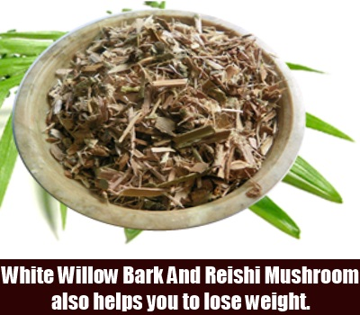 White Willow Bark And Reishi Mushroom