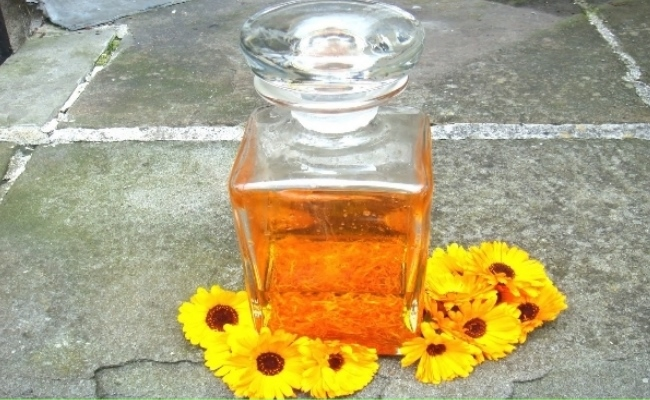 Calendula Oil With Wheat Germ Oil