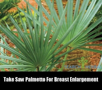 Herbs To Increase Breast Size - Boldsky.com