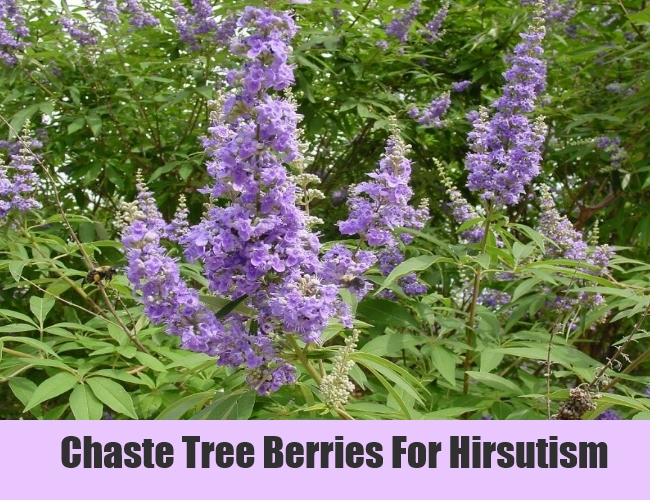 Chaste Tree Berries For Hirsutism