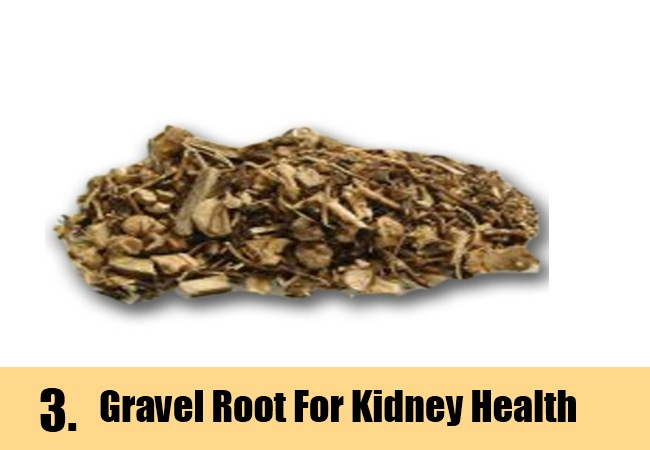 Gravel Root and Kidney Stone