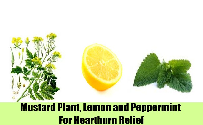 Use Mustard Plant, Lemon and Peppermint