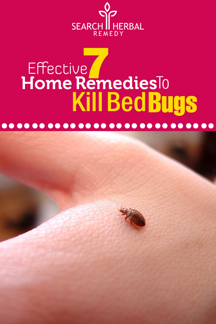 effective-7-home-remedies-to-kill-bed-bugs