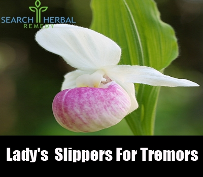 lady's slippers