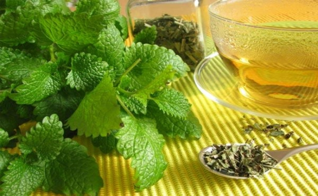 Curing With Lemon Balm