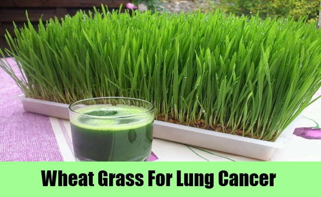 Wheat Grass