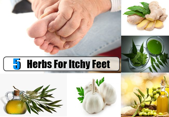 Herbs For Itchy Feet