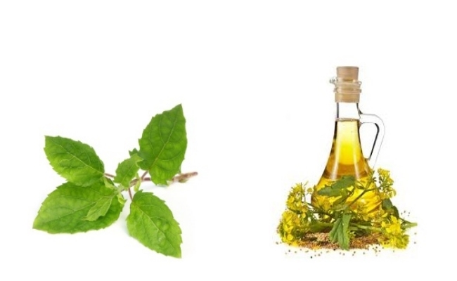 Basil Leaves And Mustard Oil