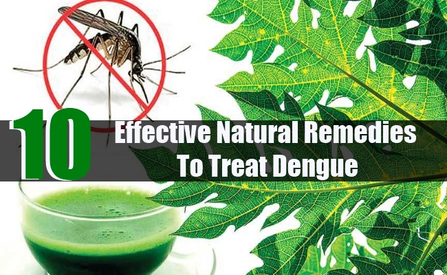 10 Effective Natural Remedies To Treat Dengue
