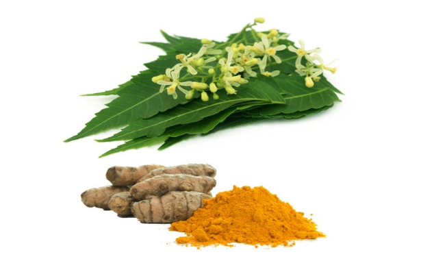 Indian Lilac And Turmeric