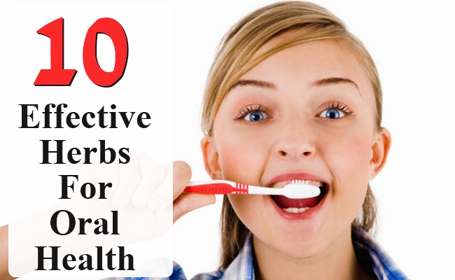 Effective Herbs For Oral Health