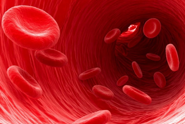 Repairs The Blood Vascular System
