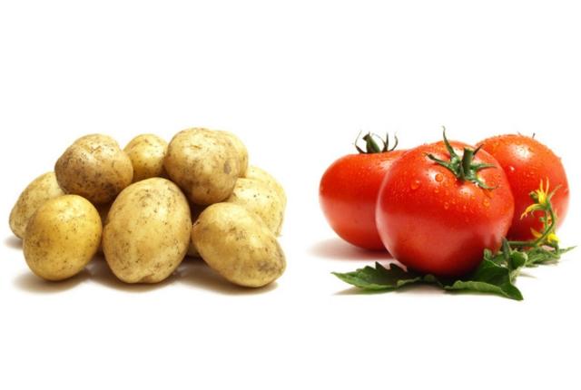 Tomato And Potato Juice Pack