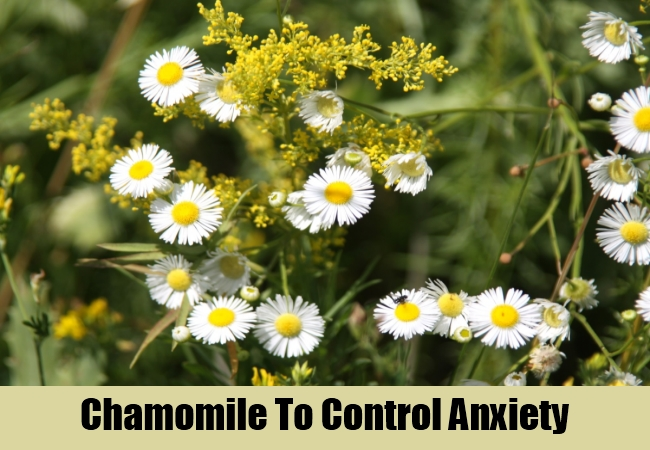 Chamomile To Control Anxiety