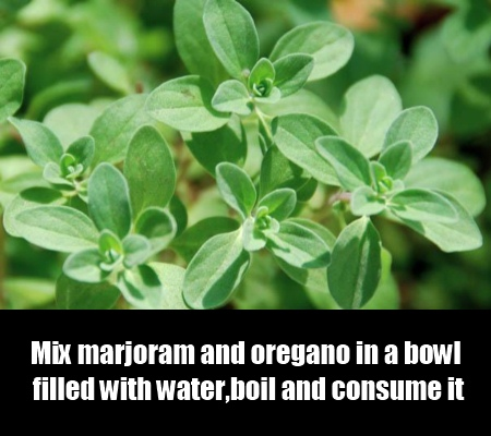 Marjoram And Oregano