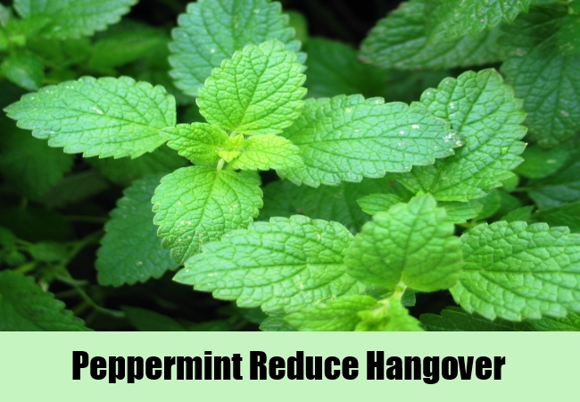 Peppermint Reduce Hangover