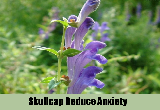 Skullcap Reduce Anxiety