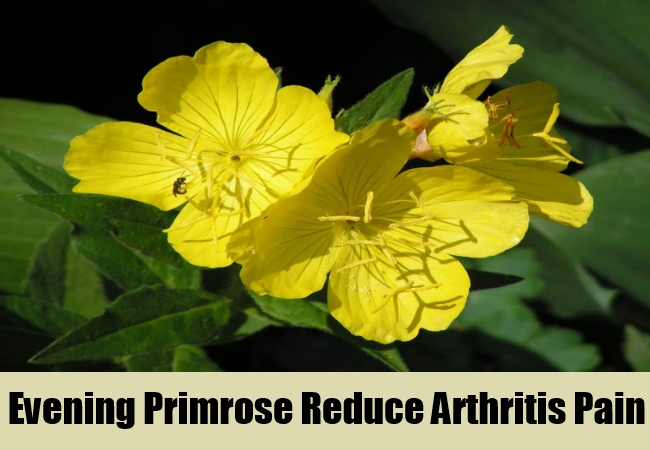 Evening Primrose Reduce Arthritis Pain