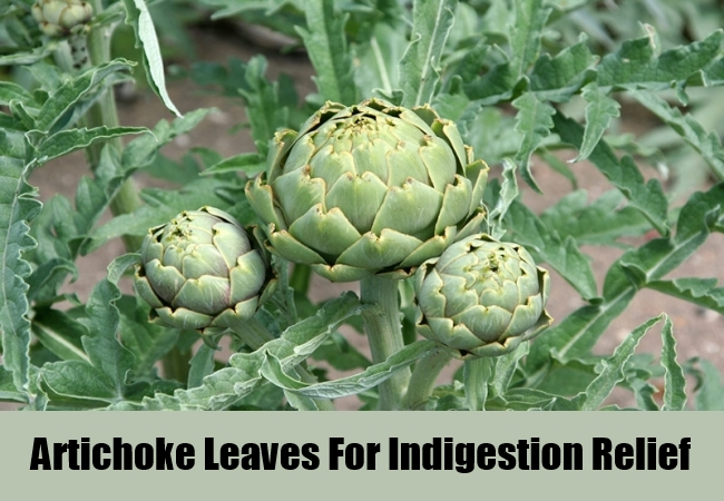 Artichoke Leaves For Indigestion Relief