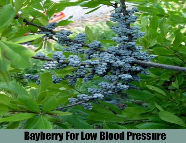 Bayberry For Low Blood Pressure