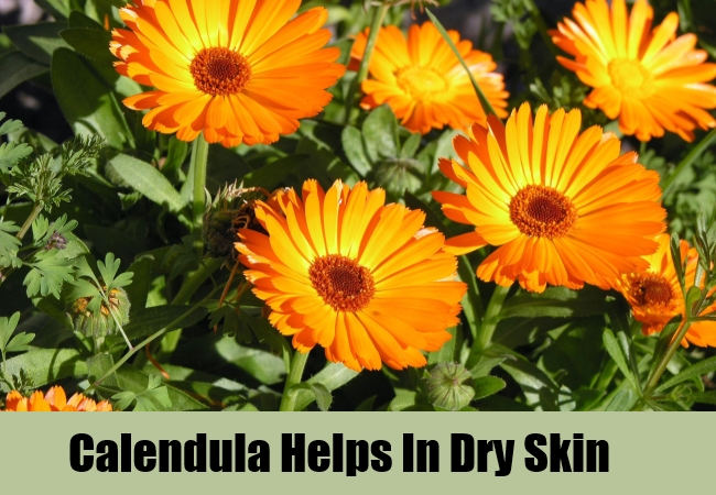 Calendula Helps In Dry Skin