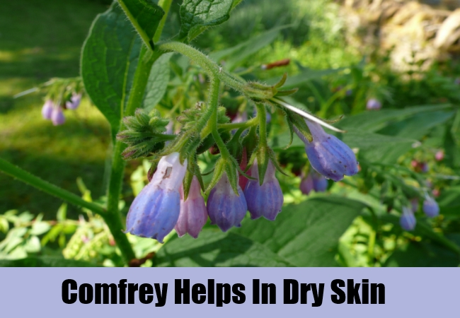Comfrey Helps In Dry Skin