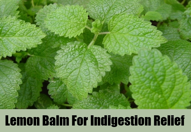 Lemon Balm For Indigestion Relief
