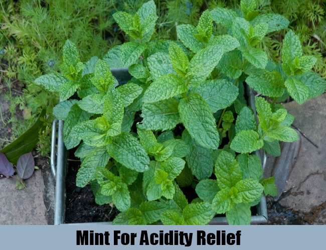 Mint For Acidity Relief