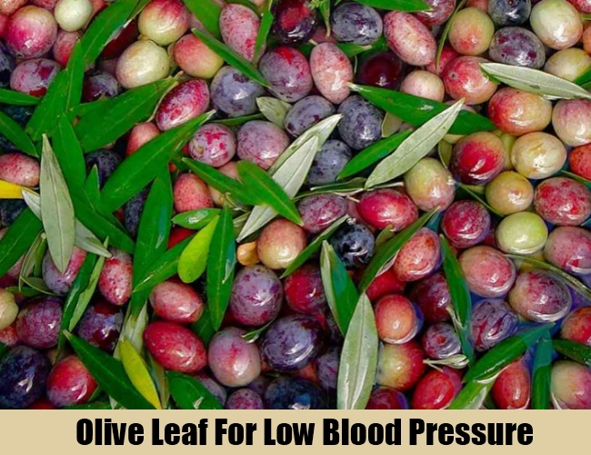 Olive Leaf For Low Blood Pressure
