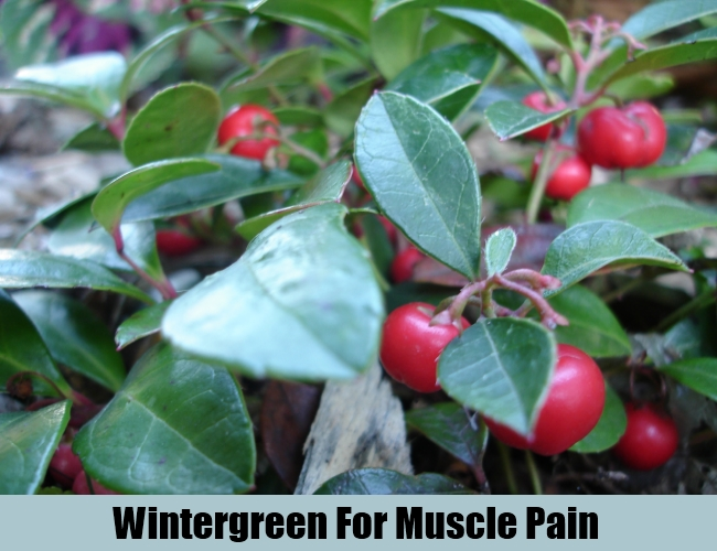 Wintergreen For Muscle Pain