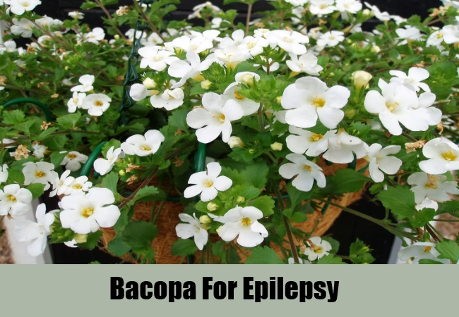 Bacopa For Epilepsy