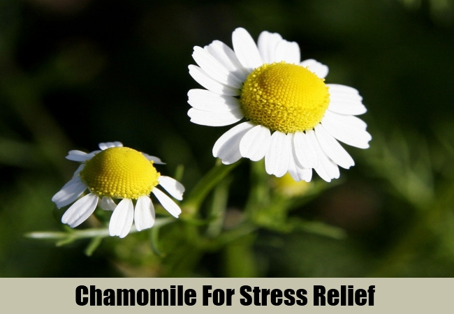 Chamomile For Stress Relief