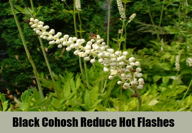Black Cohosh Reduce Hot Flashes