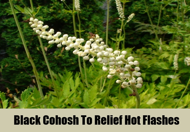 Black Cohosh To Relief Hot Flashes