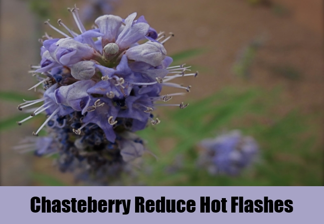 Chasteberry Reduce Hot Flashes