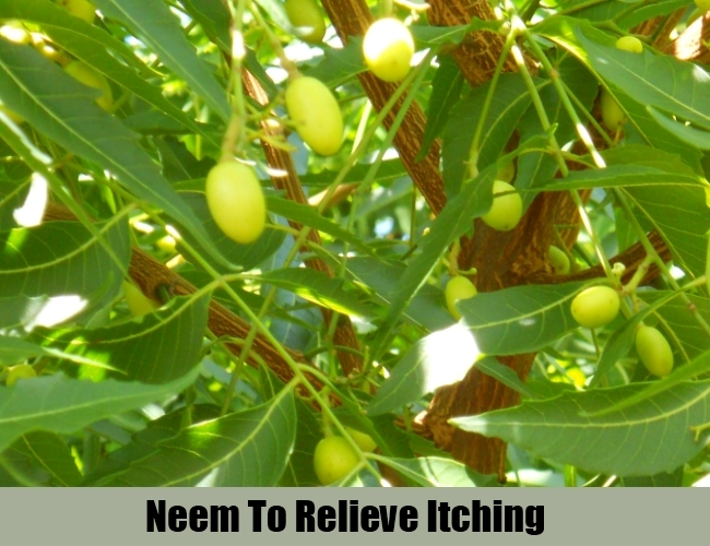 Neem To Relieve Itching