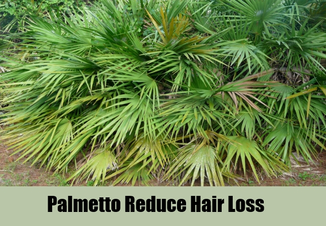 Palmetto Reduce Hair Loss