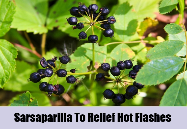 Sarsaparilla To Relief Hot Flashes